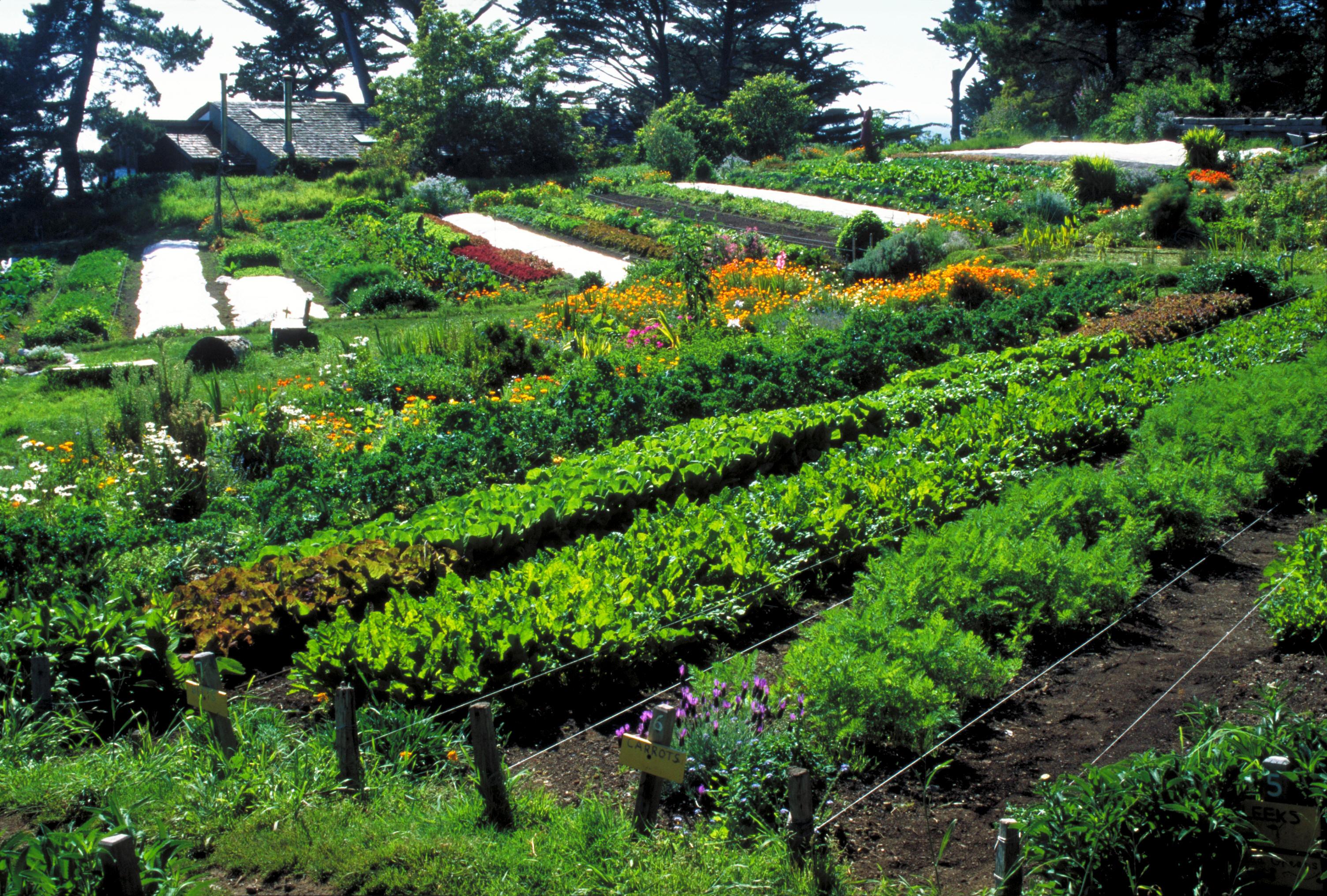 L'agricoltura sinergica. Il maestro Fukuoka e la rivoluzione del filo di paglia